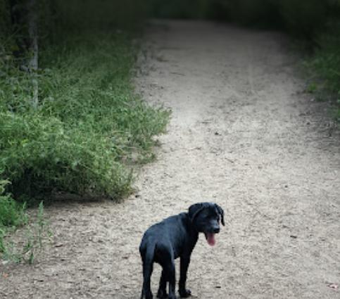 Un homme marchant avec son chien s'est retrouvé coincé dans la boue le mois dernier