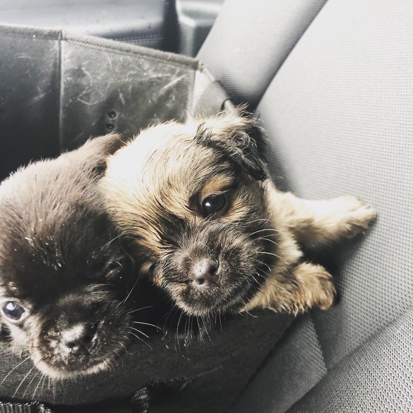 Cst. Andrea Cohen ensured the safe return of six-week-old puppies to their mother